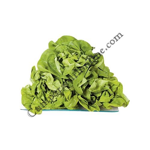Salata verde import pret/buc.